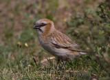 CHINA (SICHUAN & QINGHAI): Birds
