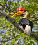 INDONESIA: Birds