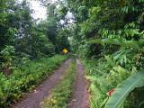 Ecclesdown-Road-Jamaica-22-March-2016-Sam-Woods-IMG_4422.jpg