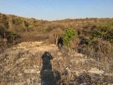 Hellshire-Hills_Jamaica_IMG_1649-EDIT.jpg