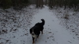 Going for a walk in the snow!