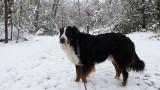 Everest loves snow!