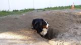 I'm digging a hole!