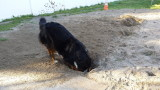 ....and digging!