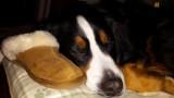 He stole mommy's slipper