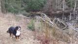 An off-leash adventure!