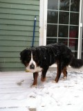 Everest loves the snow!
