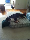 Spoiled Dog!