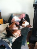 Lap Dog!