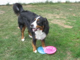 Frisbee time!