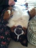 Belly rub!