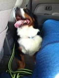 Happy Dog!