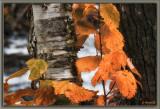 Leaves and Vegitation