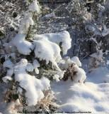 belslijntje_winter_20130116_009.jpg