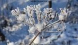 belslijntje_winter_20130116_030.jpg
