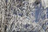 belslijntje_winter_20130116_037.jpg