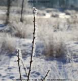 belslijntje_winter_20130116_039.jpg