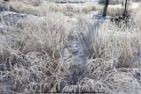 belslijntje_winter_20130116_040.jpg