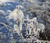 belslijntje_winter_20130116_042.jpg