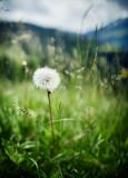 Natur.f_150602_2426.jpg