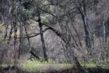 Landschaft.f_161121_4484.jpg