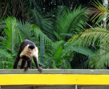 PANAMA  UN PAYS PLEIN D'AVENIR