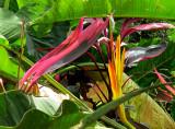fleurs et plante tropicale