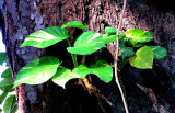 Faune et Flore du Panama