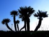 z-palmiers.jpg