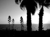 aurore en noir et blanc