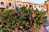 Bouquets de cactus