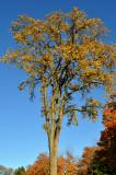L'arbre bouquet