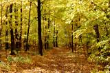 Promenade dans le parc de la chute Montmorency oct 14 1008.jpg