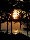 orange sous les palmiers
