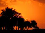 Suite solaire pour un matin enflammé