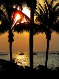 filtre palmiers