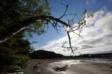 arbre à contrejour