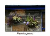 PitlochryFlores2.jpg