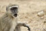 Mahango mono