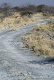 Makgadikgadi impala