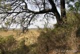 Chobe camping