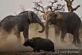 Savuti_elefantes2