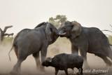 Savuti_elefantes3