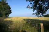 14th July 2013  cornfield