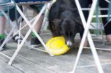 18th July 2013  friendly dog