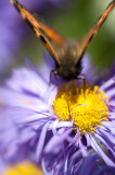 31st July 2013  nectar