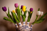 31st March 2014  tulips