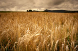 31st August 2014  barley