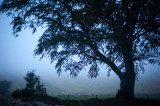 16th September 2014  blue mist