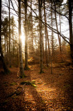 8th March 2015  sunshine in the woods